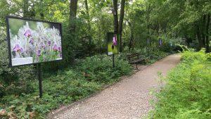 Pozdani botanikus kert sétánya, tájékoztató plakátokkal